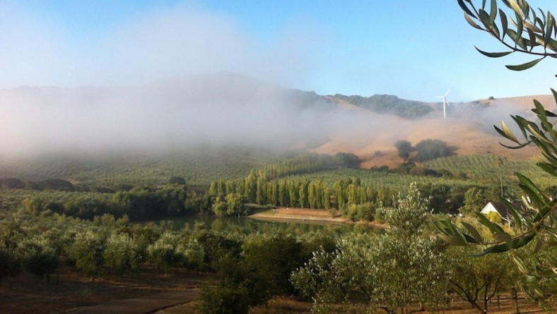 Inspiration from the Remarkable McEvoy Ranch in Northern CA